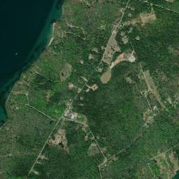 Cliff Island: Invasive Plant Species